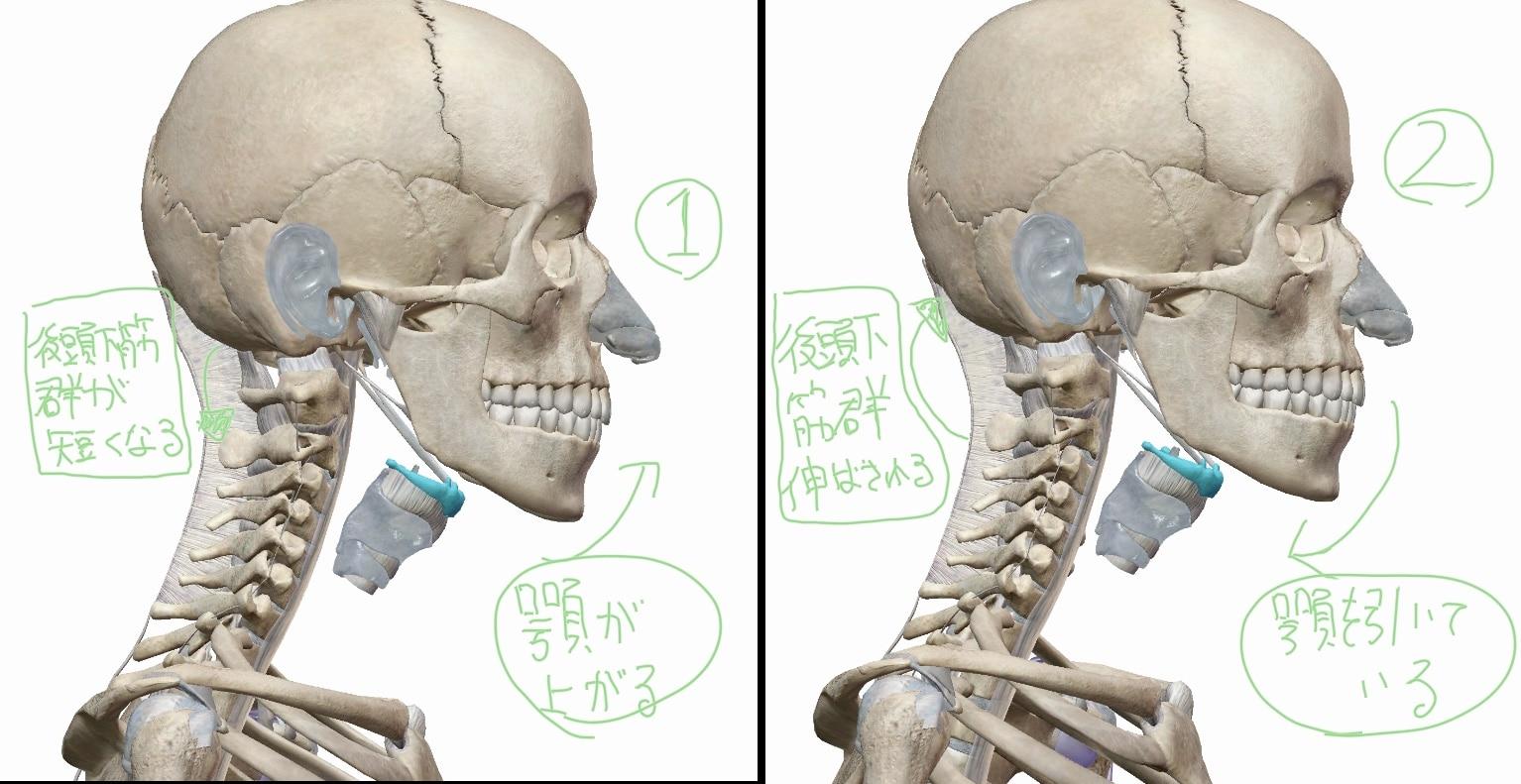 顎を引いた時と上がっている時の首の状態を横から見た際の比較