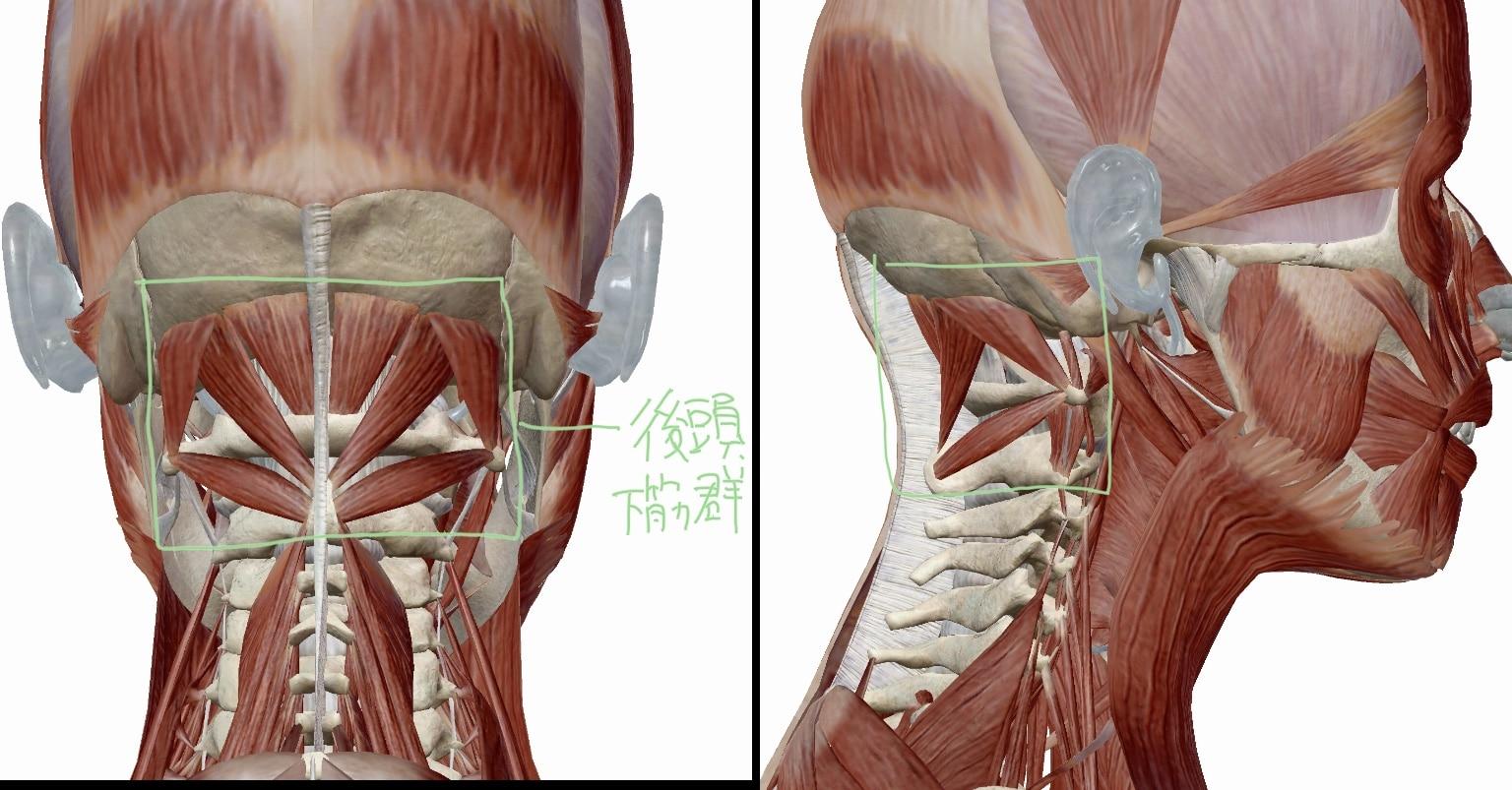 後頭下筋群の図