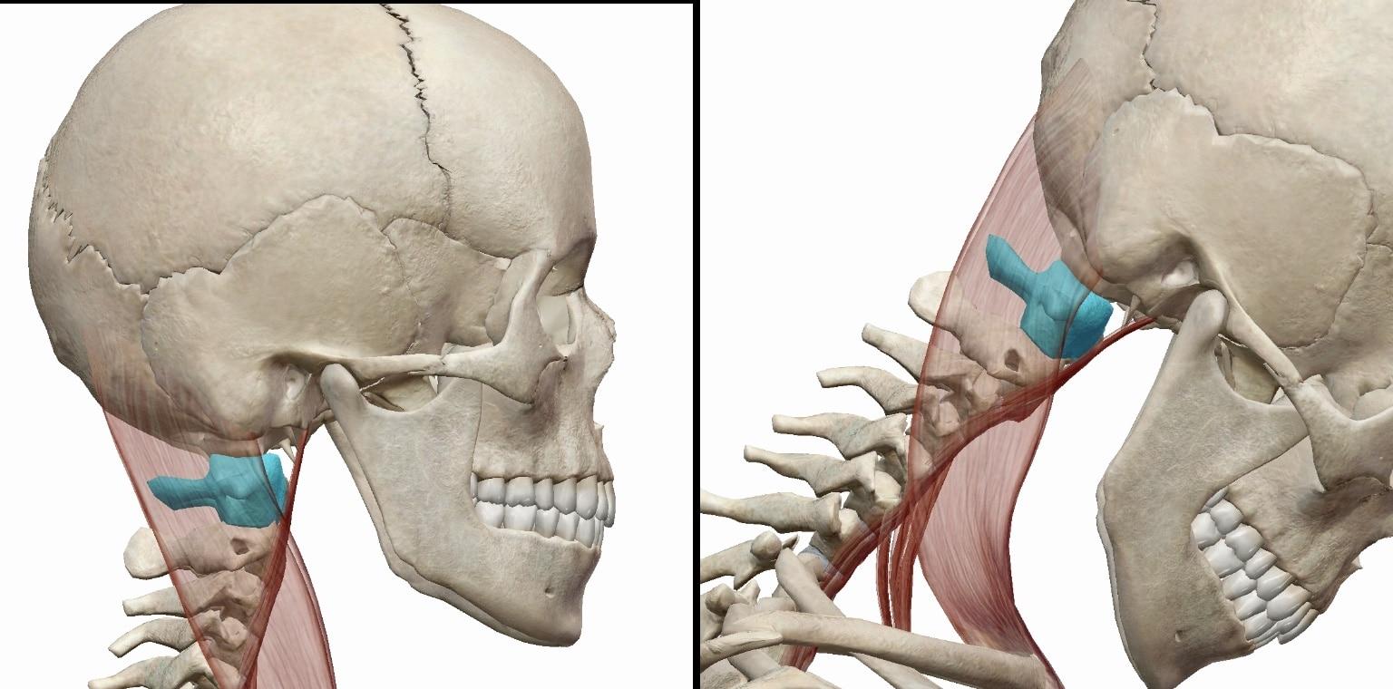 下を向いた際の頸椎の動きの図