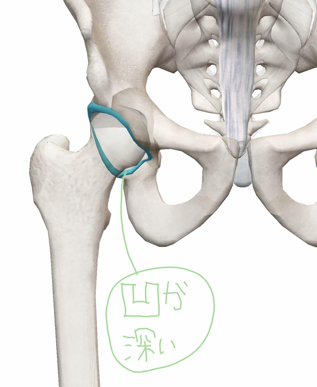 骨盤の凹が深い図