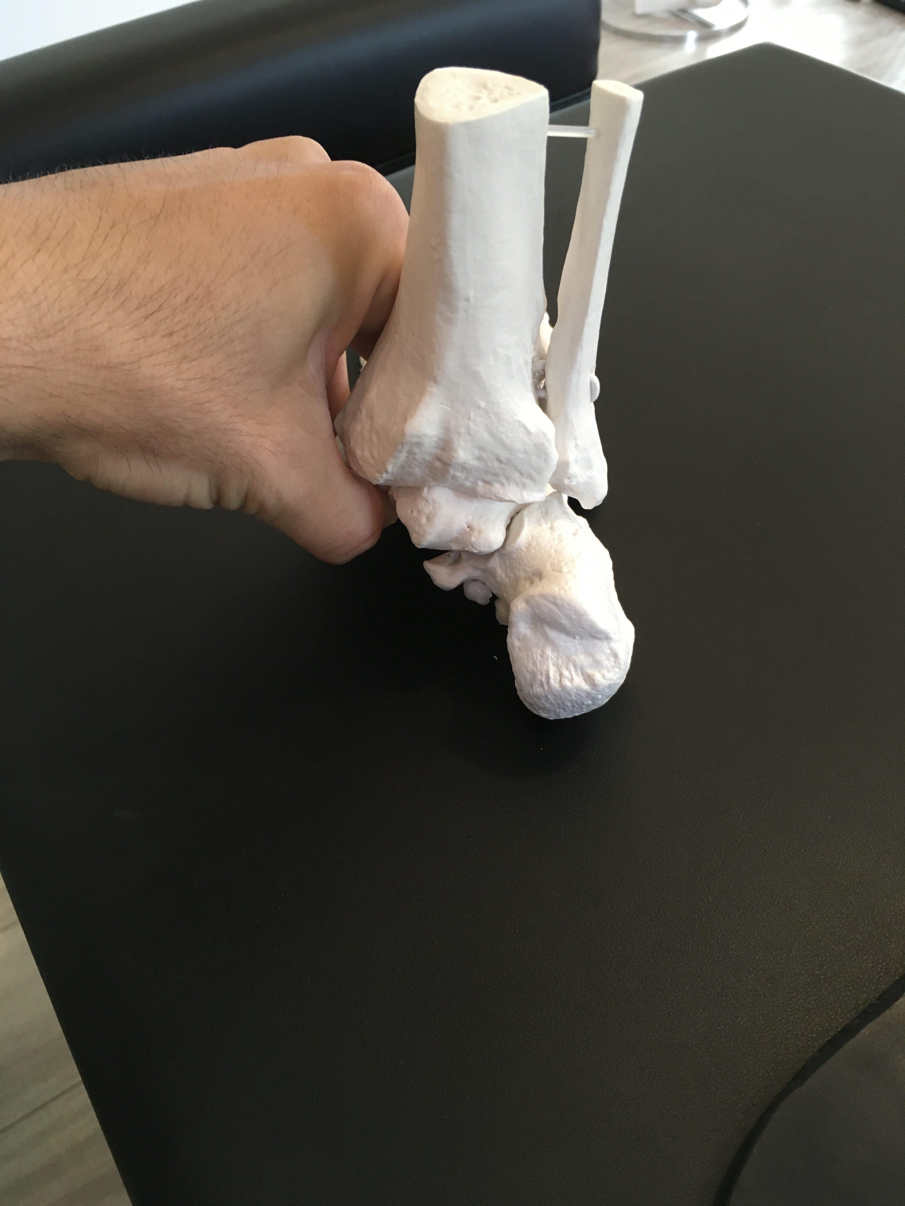 踵の模型(後面)