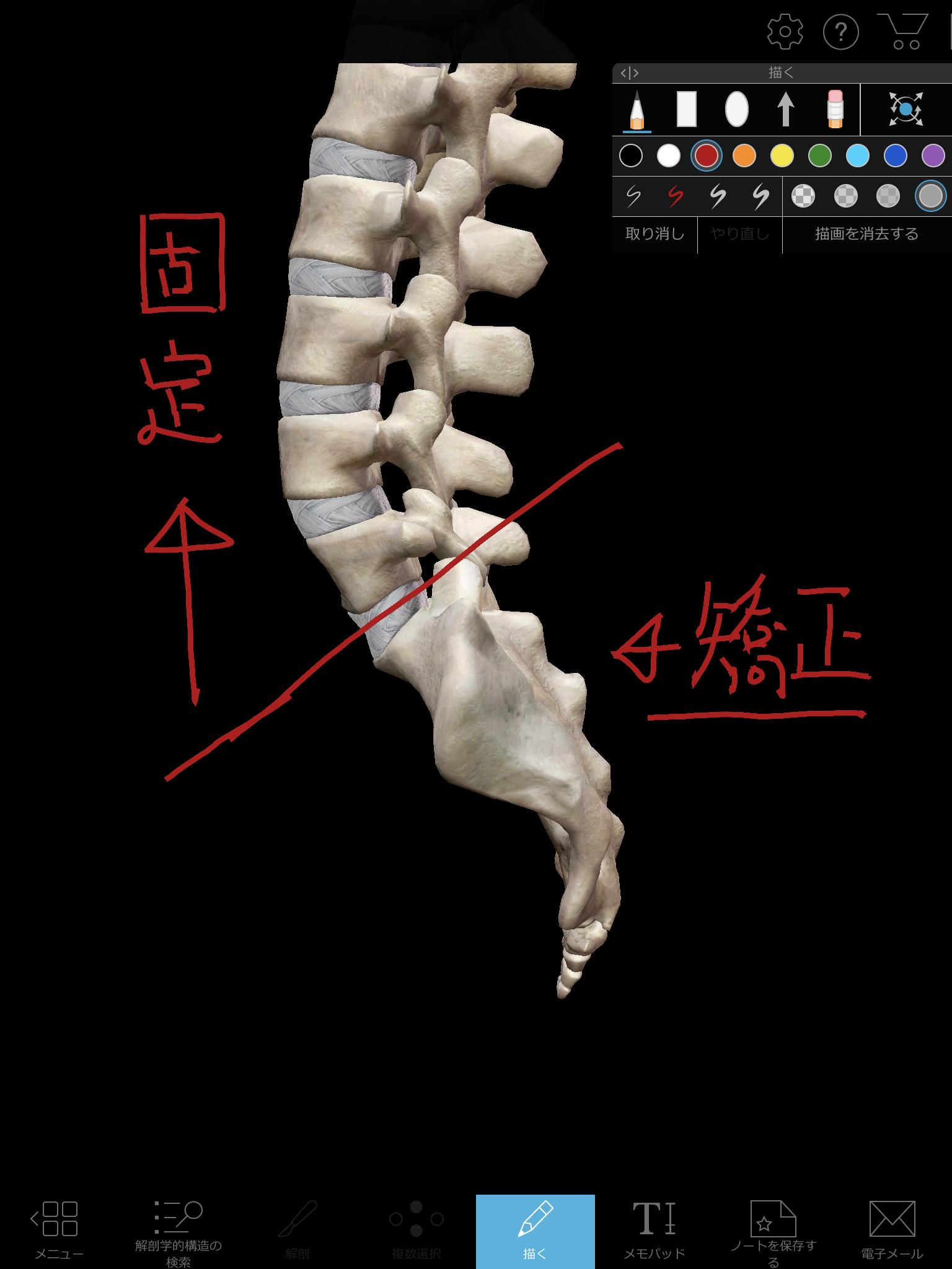 仙骨を矯正する際のイメージ図
