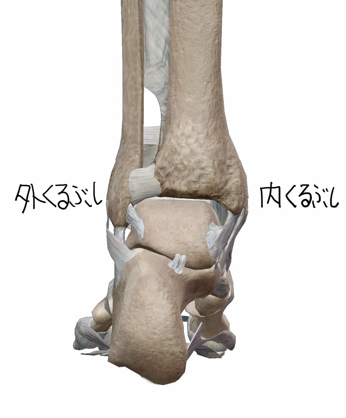足首の後面からの図
