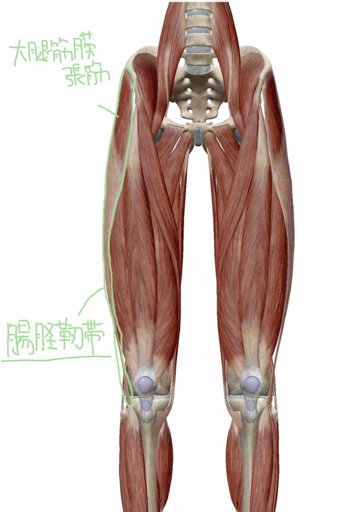 大腿筋膜張筋・腸脛靭帯と腸脛靭帯炎の位置関係の図