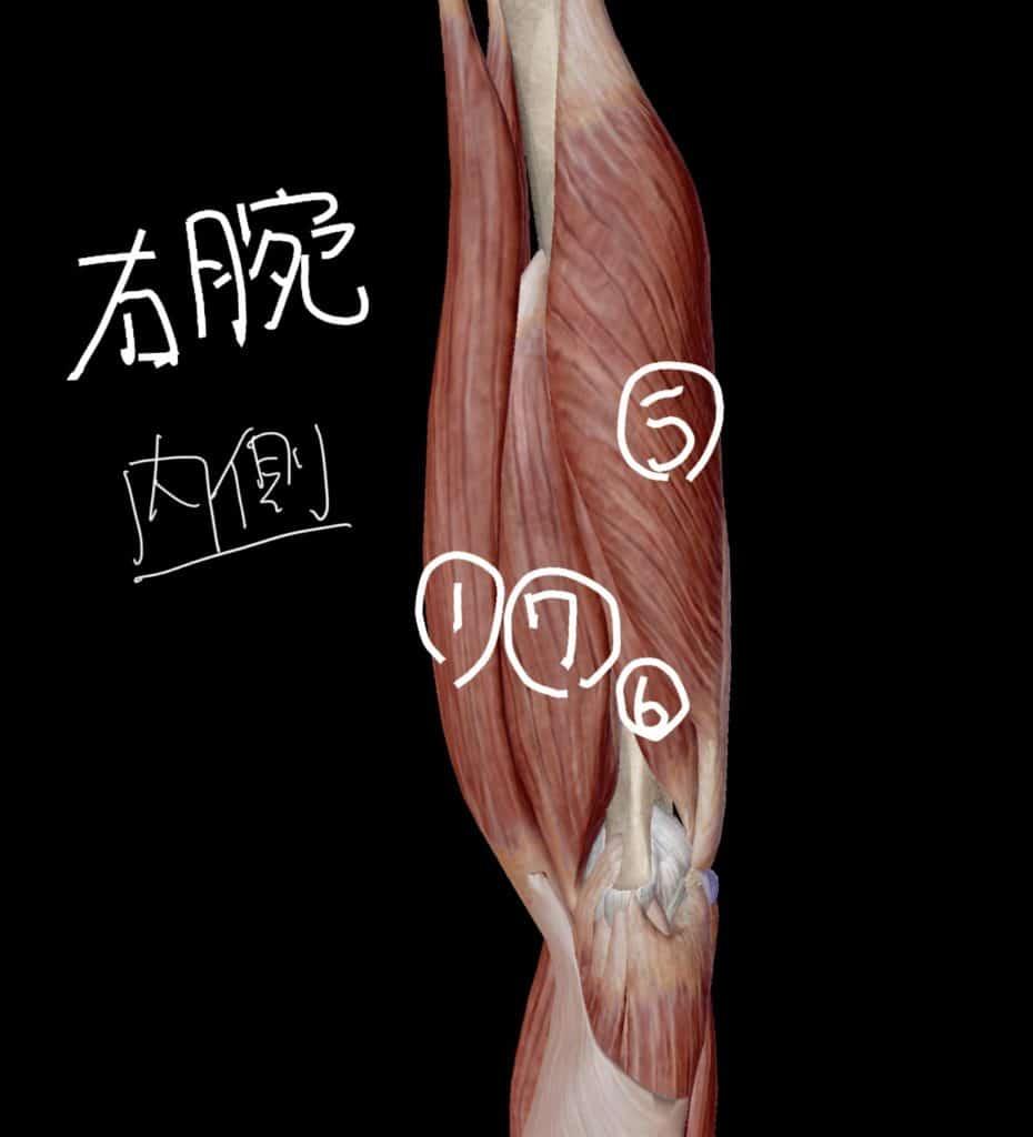 右上腕内面の図